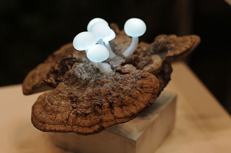 LED Mushroom Lamps